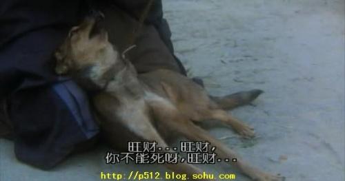《大话西游》也有一条旺财,现在基本上已经是狗的代名词了