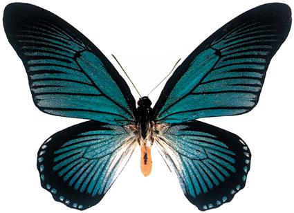 蝴蝶蝴蝶真美丽