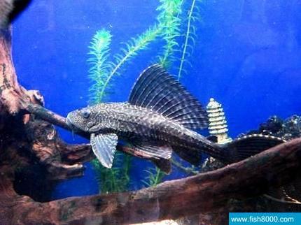 壁纸 动物 海底 海底世界 海洋馆 水族馆 鱼 鱼类 430_322