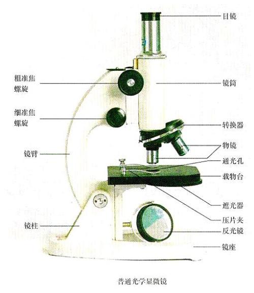 光学显微镜的使用方法