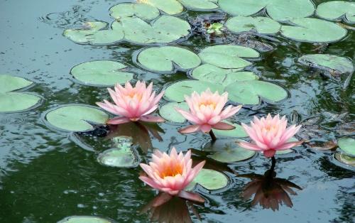 水陆草木之花,可爱者甚蕃.晋陶渊明独爱菊;自   李唐   有趣的是买