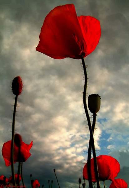 被她这种美所震惊!太美丽了[组图]_张红旗的口袋_经验口袋 - 岁月无痕 - 岁月无痕