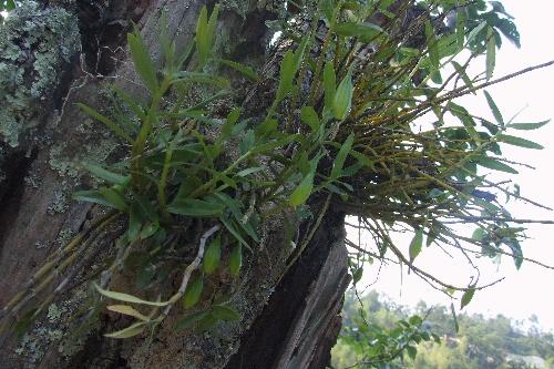寄生在树上的植物