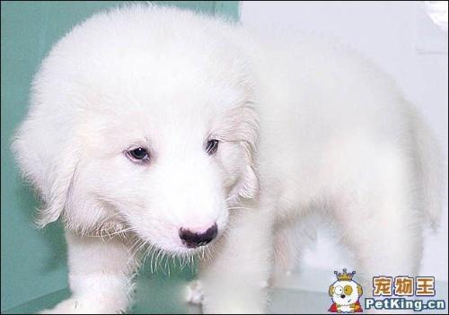 狗狗都是超级可爱的动物~所以说不喜欢动物的人是还蛮没有