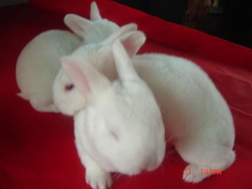可爱的小白兔-是谁的心声把流年轻唱-搜狐博客