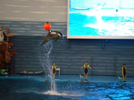 """大连---老虎滩极地海洋馆之""""海豚&白鲸表演""""-中国金牌"""