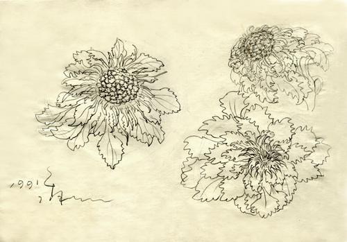 湖中的雪莲花展示