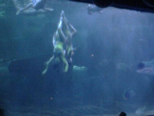 蓬莱海洋极地世界美人鱼表演-采矿cad-搜狐博客