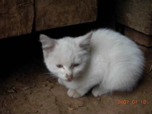 以前在博客说过白猫黑猫论.