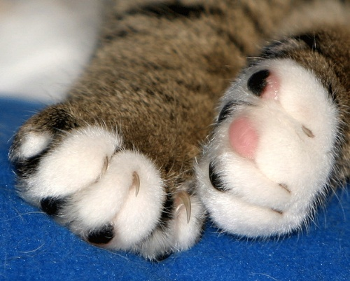 动物爪子发明什么